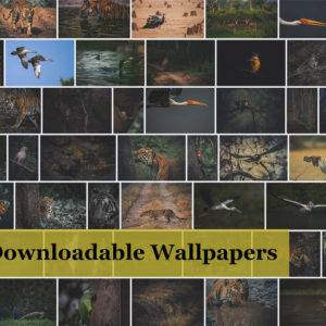 Wildlife Digital Wallpapers